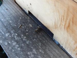 Desinfizierender Fußabstreifer - Schwarzes Propolis der Kapbiene